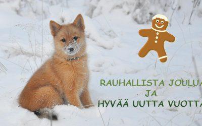 Rauhallista joulua ja hyvää uutta vuotta!
